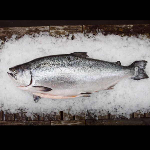 Fresh NZ King Salmon (Whole & Filleted)
